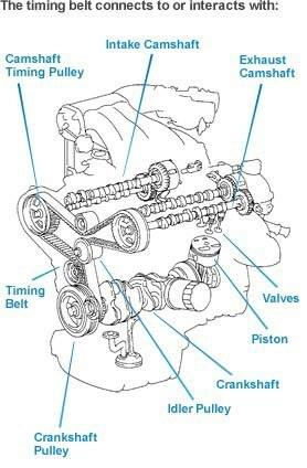 Engine Timing Belt